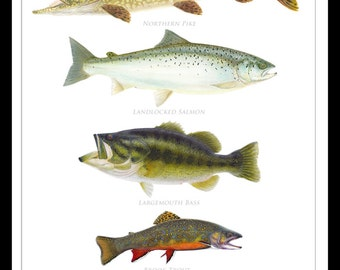 Favorite Gamefish of the Adirondacks Poster