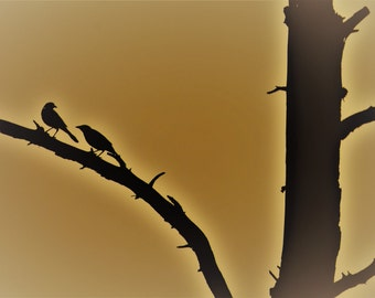 "Pond House Birds Silhouette Greeting Card- ""Chatting"""