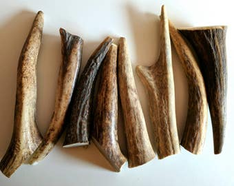 Small Antler Dog Chew - Natural Chew