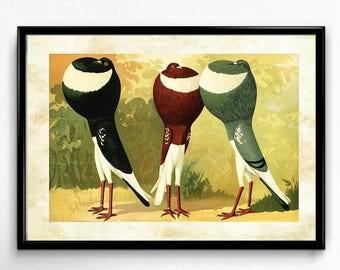 Pigeons Vintage Print - Birds Poster - Birds Art - Birds Picture - Living Room Decor - Living Room Art - Home Decor - Home Art