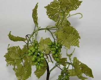The vine grape green