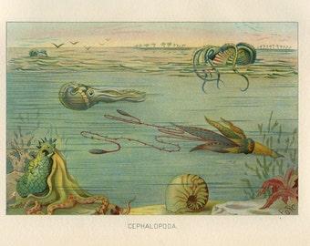 1904 Cephalopod, Octopus, Squid Digital Print Download Sea Life