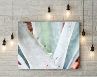 Abstract Aloe Vera Succulent Photograph Macro Botanical Picture Large Fine Art Print or Canvas Photography Wall Art