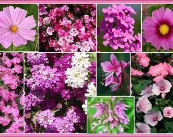 Grow Your Own Pretty In Pink Wildflower Seed Mix 150 Seeds, Organic Wild Flower Seeds, GMO Free