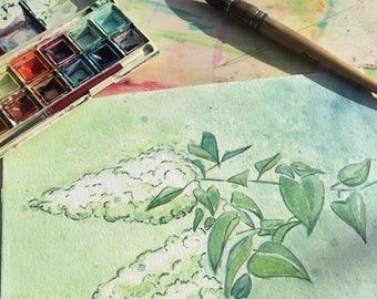 White lilac - original watercolor - 18 x 27 cm