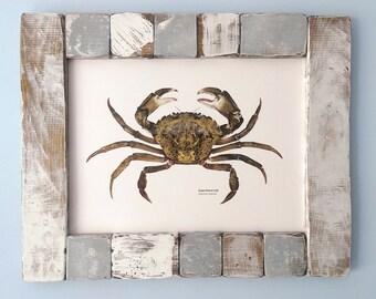 Green Shore Crab print, Crab illustration, Coastal print