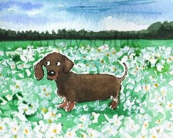 Dachshund Dog 'Daisies' Fine Art Print #419