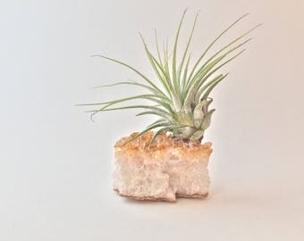 Glowing Citrine Crystal, Air Plant, Real Crystal Cluster, Tillandsia, One of a Kind Gift, Unique Boho Decor, Gift for Her