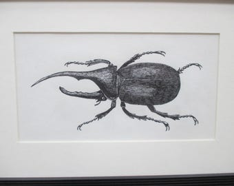 Hercules Beetle Insect Ink Drawing