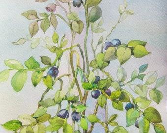 Floral Fine Art Watercolor Painting Blueberries Flower Art - Original Watercolour Home Decor