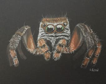 Little Jumping Spider