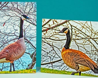 Goose Gander pair,wall art,edge,wrapped,ready to hang,kitchen,hall,photos,ship together