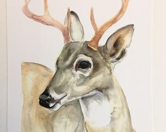 LIMITED EDITION, signed Stag Watercolor PRINT 1/20
