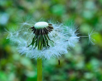 Nature Photography - Make a Wish by Justin Bromberg