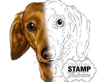 Dachshund Art, Dog Digital Stamp or Coloring Page, Dog Art Digital Download, Digital Scrapbooking Supplies