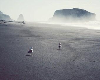 "Beach ocean photography print,  neutral gray wall art  ""Two Gulls"""