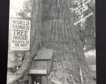 Real Photo Postcard Redwood Forest Tree House Black & White Photograph RPPC 1950