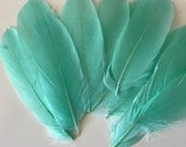 LOOSE GOOSE Feathers, Exclusive  Quality, Aqua, Mint Green  / 781