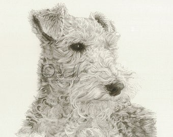 Wire Fox Terrier Drawing Print