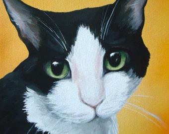 custom painted pet portrait sample 8x10 size canvas by Amy Jorge