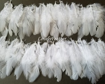 100 Pcs white coque feathers
