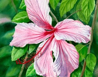 Pink & Red Hibiscus Tropical Flower, Blossom, Watercolor Floral Original Painting 11.5x13.5