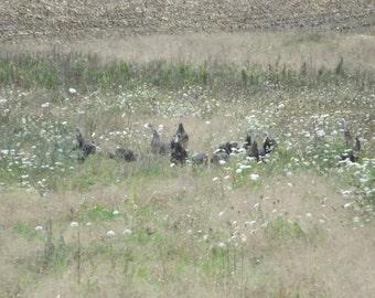 Turkeys in the Flowers