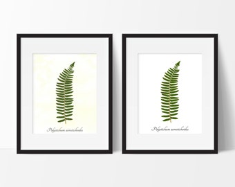 Christmas Fern Pressed Botanical Print - Real Fern Herbarium Reproduction Print - Botanical Wall Art Print - Home Decor
