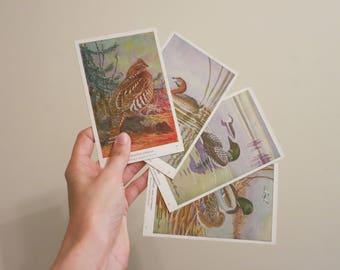 Birds Audubon Society print set Spring painting Allan Brooks trading cards nature bird watcher