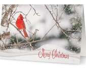 50% OFF - 10 Cardinal Christmas cards, bird Christmas cards, nature Christmas cards, holiday cards, bird photography, nature photography