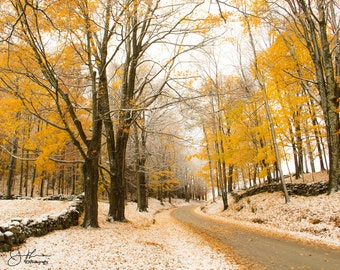 Maple Lined Country Road in Vermont Print