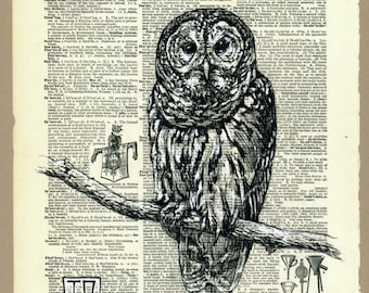 Spotted Owl Illustration on Vintage Dictionary Page