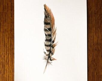 Original Pheasant Feather Drawing