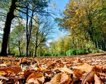 Pollok Park, Glasgow. Autumn landscape: Fine art photography print. Wall art. Wall decor. Contemporary art.