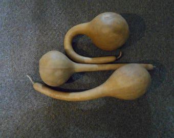 3 dried dipper gourds.