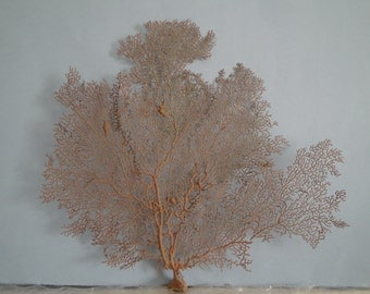 "14.8"" x 13.3"" Natural Red Color Sea Fan Seashells Reef Coral"