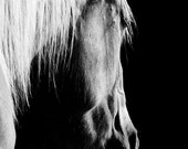 FREE SHIPPING Horse Photography Black and White Horse Art Canvas