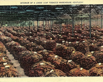Kentucky, Tobacco, Warehouse - Vintage Postcard - Linen Postcard - Unused (FF)