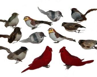 12 pc 3 1/2 Inch to 5 Inch Craft Bird Assortment (Assortment C)