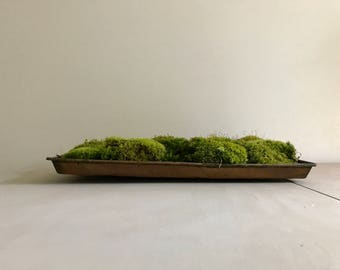 Copper Seedling Tray with Moss