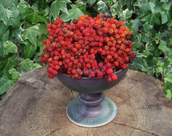 Dried English Rowan Berries, 30g - Witchcraft, Druid, Celtic, Magic, Wicca,