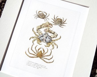 Crab Sea Life Coastal Naturalist Collection 3 Archival Print on Watercolor Paper