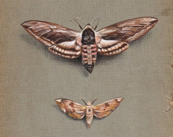 MOTHS print from an original painting by Irene Owens
