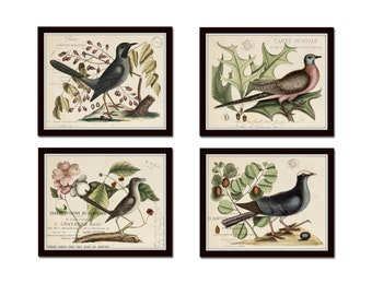 Vintage Bird and Botanical Print Set No.7,  Giclee, Art Prints, Botanical Print, Wall Art, Mark Catesby, Illustration, Collage, Print Set