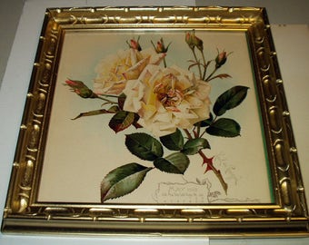 Paul de Longpre Original 1901 White and Pink Tinted Roses Flowers Antique Gold Wood Frame Picture Home Decor Wall Hanging Art