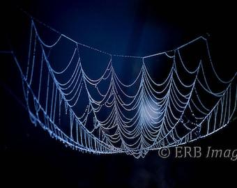 Natural Chandelier Fine Art Photograph Dew covered spider web