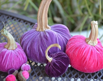 Pinks and Purples Velvet Pumpkins and Acorns with Real Pumpkin Stems, Valentine's