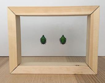 Green Beetles // Taxidermy Beetles // Real Beetle Art // Dried Framed Beetles