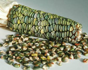 VCOO)~GREEN OAXACAN Corn~Seeds!!~~~~Tons of Color!
