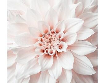 Dahlia photo print, Photographic print, flower photo picture, fine art flower print, gift for gardener, cafe au lait dahlia photograph